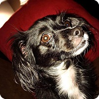 Adopt A Pet :: Sheila - Houston, TX