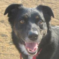 Adopt A Pet :: Strider - Sacramento, CA