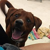 Adopt A Pet :: Teddy - Pottsville, PA