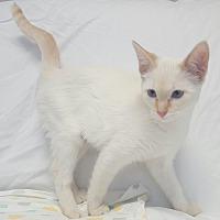 Adopt A Pet :: Faith - Hawk Point, MO