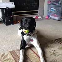 Adopt A Pet :: Abby-Doo - Denver, CO