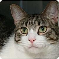 Adopt A Pet :: Madison - Canoga Park, CA