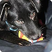 Adopt A Pet :: Paco - Hastings, NY