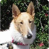 Adopt A Pet :: Riley - Gardena, CA