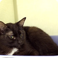 Adopt A Pet :: Babas - Chicago, IL