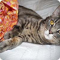 Adopt A Pet :: Felix - Xenia, OH