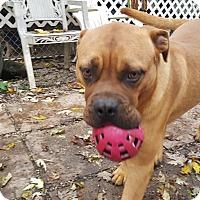 Adopt A Pet :: Hooch - ADOPTION PENDING!! - Antioch, IL