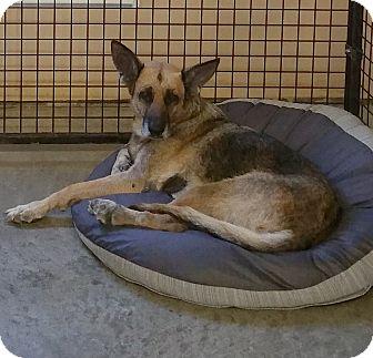 German Shepherd Dog Mix Dog for adoption in Urbana, Ohio - Nordika