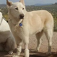 Adopt A Pet :: Ghost - Phoenix, AZ