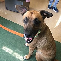 Adopt A Pet :: Maya (Lil Sis previously) - Homestead, FL