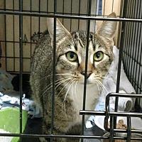 Adopt A Pet :: Peanutte - Saginaw, MI