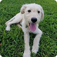 Adopt A Pet :: Bowman $400 - Seneca, SC