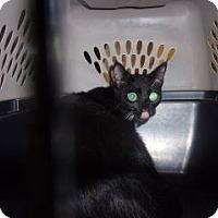 Adopt A Pet :: Mia - Princeton, WV