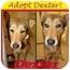 Photo 3 - German Shepherd Dog/Husky Mix Dog for adoption in White Settlement, Texas - Dexter