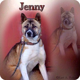 Akita Puppy for adoption in Toms River, New Jersey - Jenny