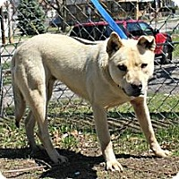 Adopt A Pet :: Betsy - Grand Rapids, MI