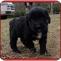 Adopt A Pet :: Lana Loo - Staunton, VA