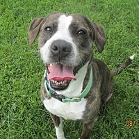 Adopt A Pet :: Carley - Lake Odessa, MI