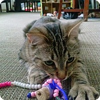 Adopt A Pet :: Prince Charming - Chicago, IL