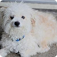 Adopt A Pet :: Diego - Norwalk, CT