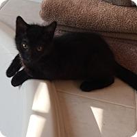 Adopt A Pet :: Darth - Jackson, NJ