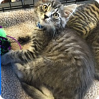 Adopt A Pet :: Max - Horsham, PA