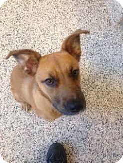 German Shepherd Dog Mix Dog for adoption in Aiken, South Carolina - Wilhelmina