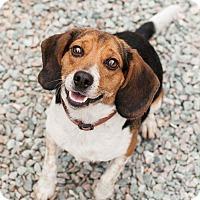 Adopt A Pet :: Ken - Richmond, VA