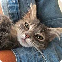 Adopt A Pet :: Elizabeth - Davis, CA