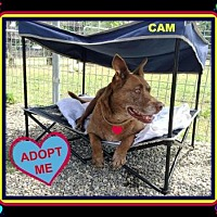 Adopt A Pet :: Cam - Middletown, NY