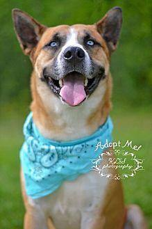 German Shepherd Dog/Husky Mix Dog for adoption in Fort Valley, Georgia - Ghost