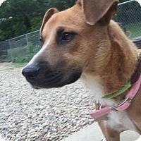 Adopt A Pet :: Hula - Kansas City, MO
