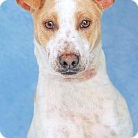 Adopt A Pet :: Holly Hobby - Encinitas, CA