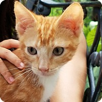 Adopt A Pet :: George - Newtown, CT
