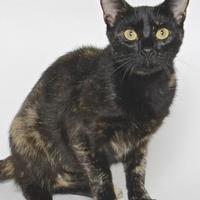 Adopt A Pet :: BANDITA - Gloucester, VA
