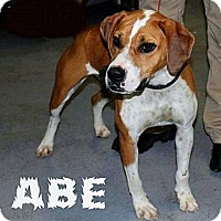 Adopt A Pet :: Abe - Chilhowie, VA