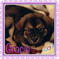 Adopt A Pet :: Gracie - New Boston, NH