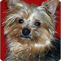 Adopt A Pet :: Shadow of Charlotte - Greensboro, NC