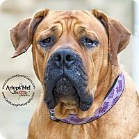 Adopt A Pet :: Kenya - Virginia Beach, VA