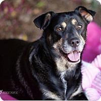 Adopt A Pet :: Baxter**Video - Pasadena, CA