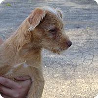 Adopt A Pet :: Darron - Delaware, OH