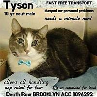 Adopt A Pet :: Tyson - Monroe, NY