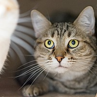 Adopt A Pet :: Lucky - Montclair, CA