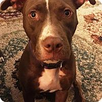 Adopt A Pet :: Kyia-Adopted! - Detroit, MI