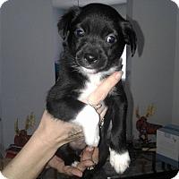 Adopt A Pet :: Kaden - Mooresville, IN