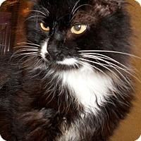 Adopt A Pet :: Rembrandt - Chattanooga, TN