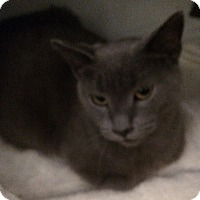 Adopt A Pet :: Shadow - Toronto, ON