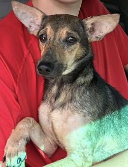 Terrier (Unknown Type, Medium) Mix Dog for adoption in Longview, Texas - Radar