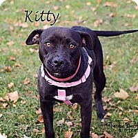 Adopt A Pet :: Kitty - Chicago, IL