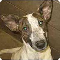 Adopt A Pet :: Freckles - Gilbert, AZ